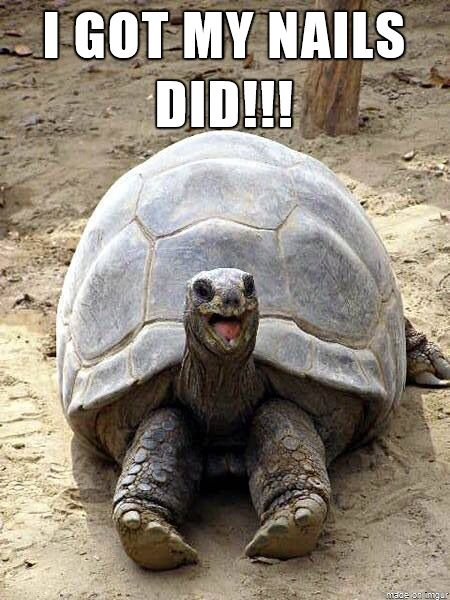 Funny Tortoise Meme I Got My Nails Did Picture