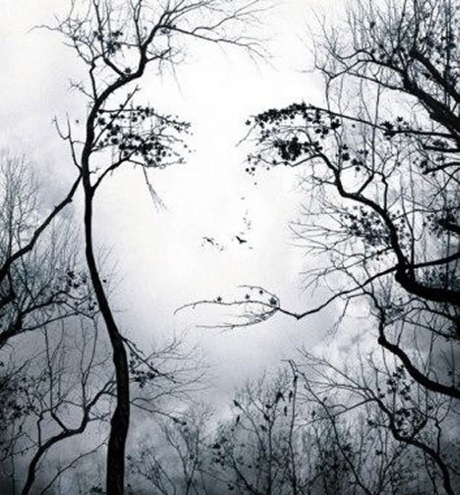 illusion optical face trees blowing mind illusions faces tree woman nature cool premonition amazing awesome eye leaves forest making change