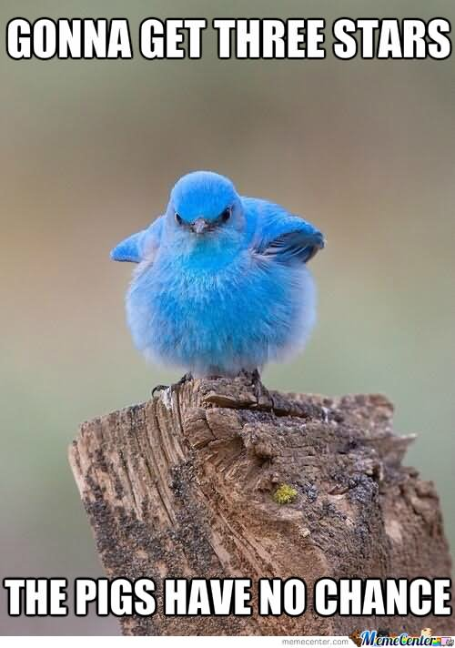 Funny angry bird memes - photo#19