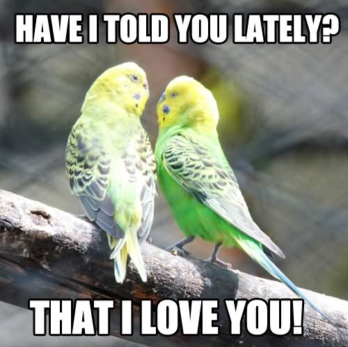 Short Sweet I Love You Quotes: 30 Most Funniest Bird Meme Images And Photos