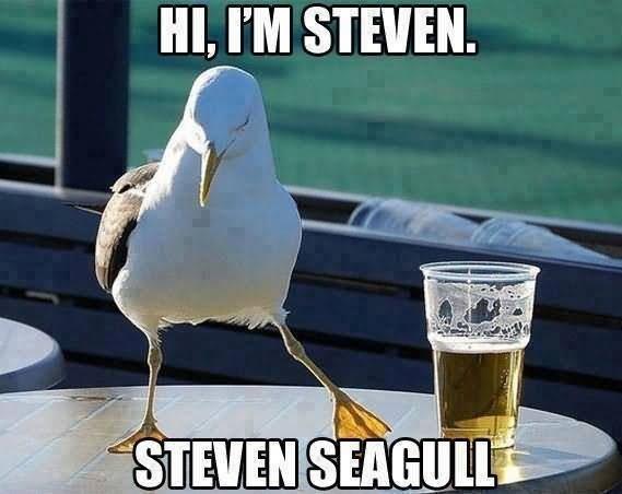 Hi I Am Steven Funny Bird Meme Picture