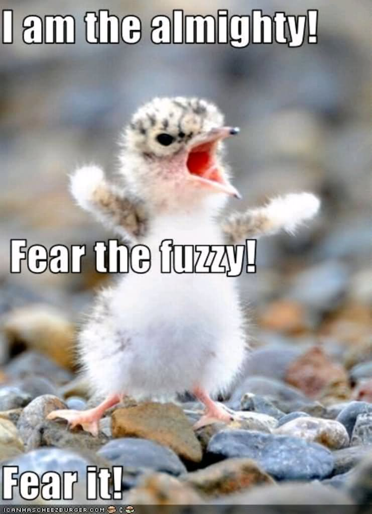 Marvelous I Am The Almighty Fear The Fuzzy Funny Bird Meme Image
