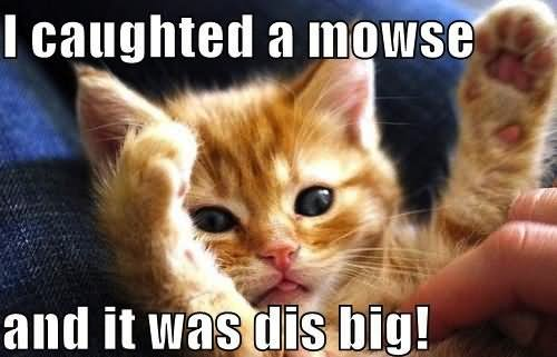 Funny Cat Memes 50 Most Funny Cat Meme...