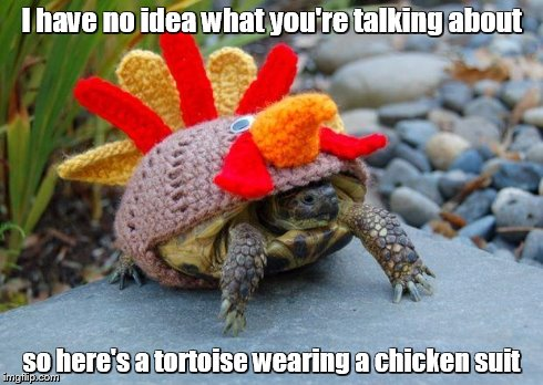 25 Most Funny Tortoise Meme Pictures You Have Ever Seen