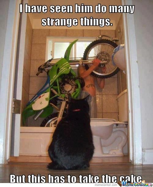 Unusual Funny Photos Weird Stuff 8