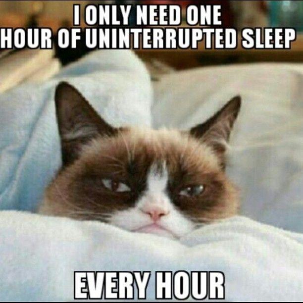 Make A Cat Go To Sleep Travel