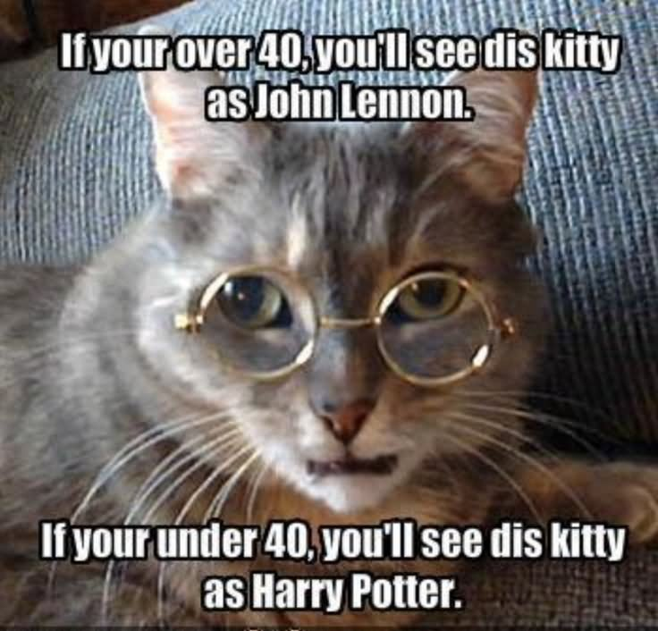 If Your 40 You Will See Dis Kitty As Harry Potter Funny Meme Image 40 very funny cat meme pictures and images