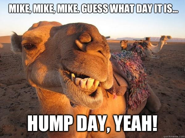 Mike Mike Mike Guess What Day It Is Hump Day Yeah Funny Camel Meme Image 23 very funny camel meme photos and images