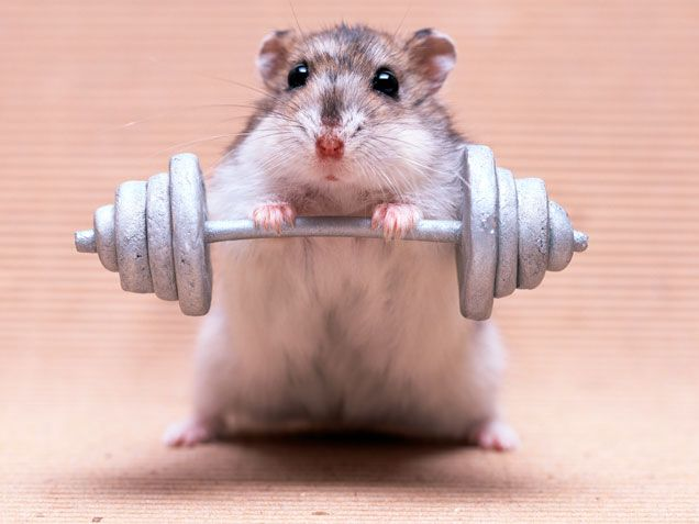 25 Most Funniest Exercise Animal Pictures That Will Make You Laugh