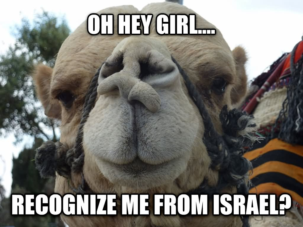 23 Very Funny Camel Meme Photos And Images