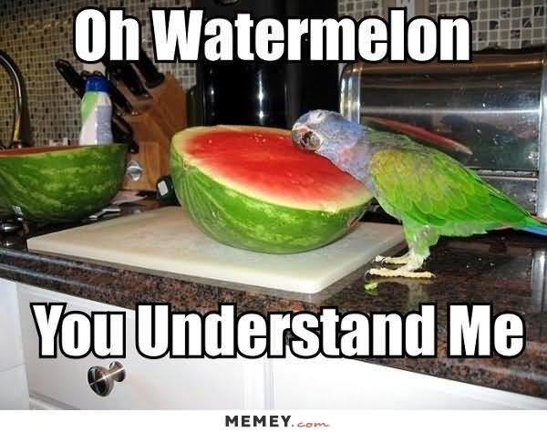 You Understand Me Meme 30 Most Funny Bird Mem...