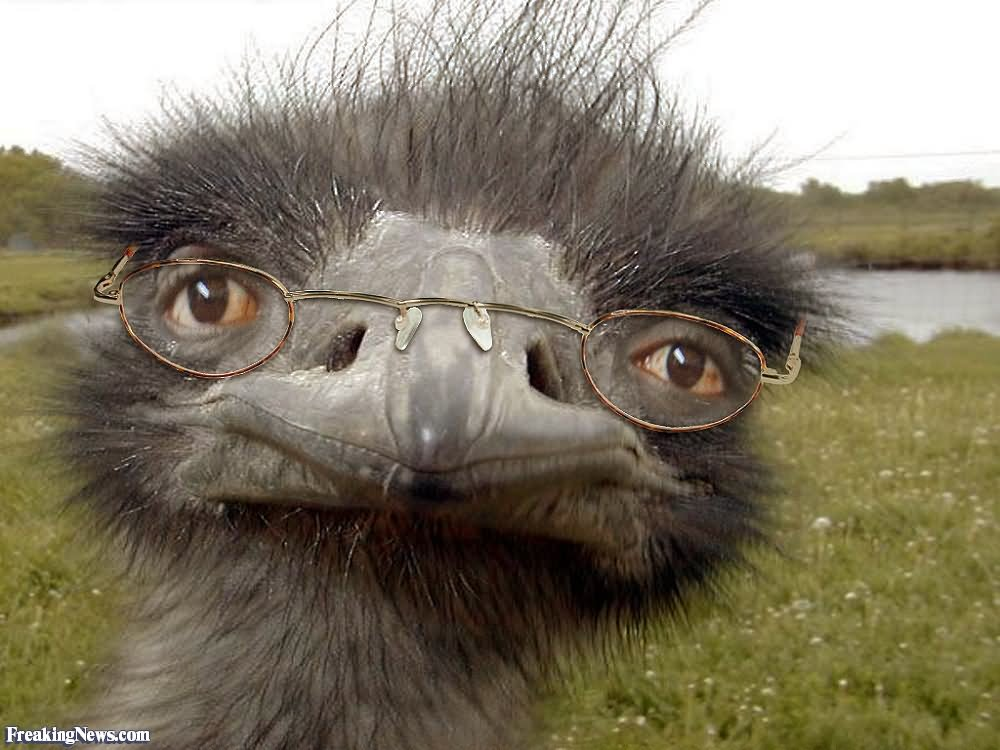Ostrich Face Angry 25 Very Funny Bird Pictures That Will Make You