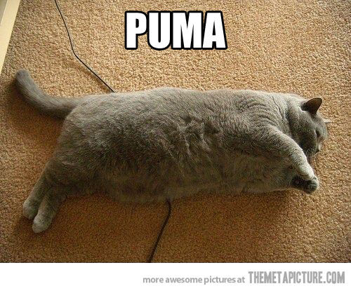 Puma Logo Funny Fat Cat Picture For Facebook