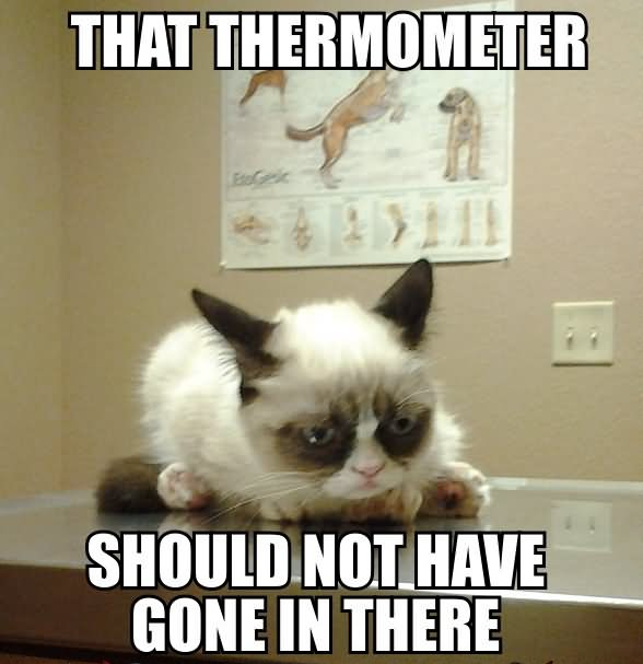 Not Funny Cat Meme : Very funny cat meme pictures and images