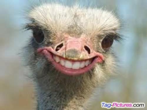 funny happy face