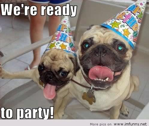We Are Ready To Party Funny Pug Dogs Picture 20 very funny birthday animal pictures and images