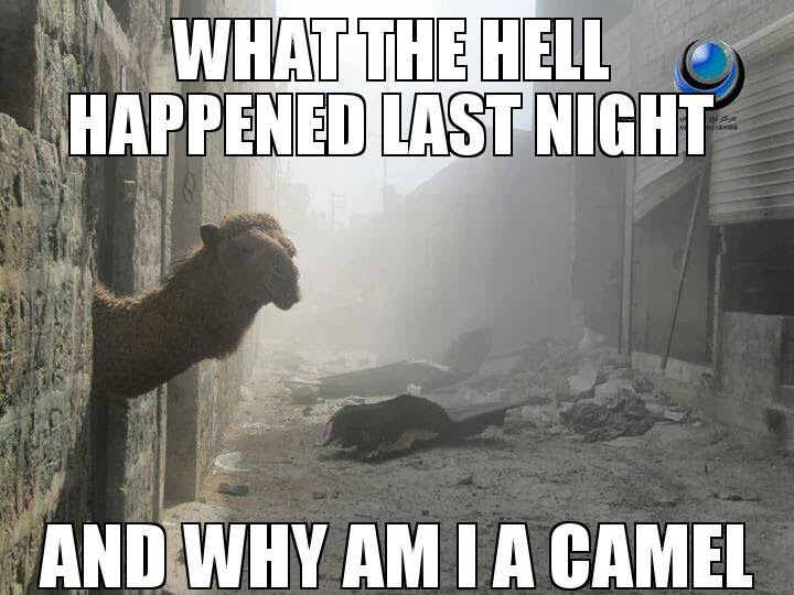 Funny Friday Night Meme : 23 very funny camel meme photos and images