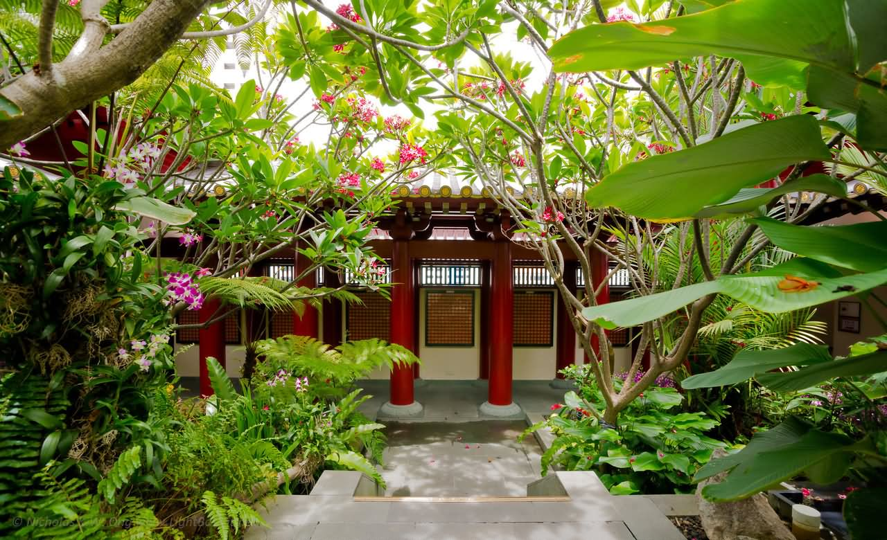 Buddha Tooth Relic Temple Terrace Garden Picture