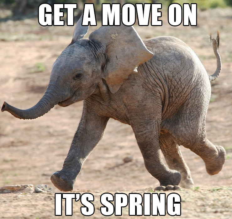 Funny Elephant Get A Move On Its Spring Meme Picture 30 most funny elephant meme pictures and photos
