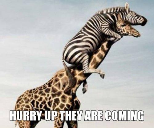 Funny giraffe cartoon meme - photo#44