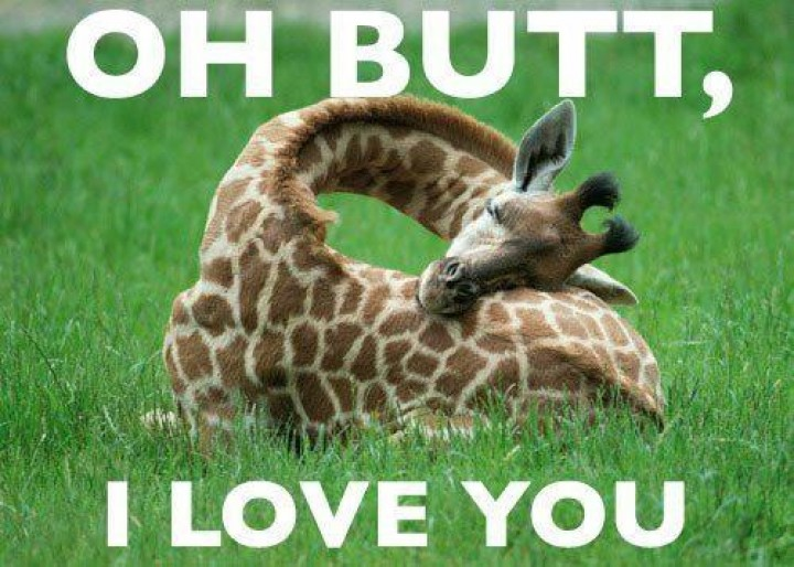 Funny Meme Quotes About Love : Most funniest giraffe meme pictures and photos