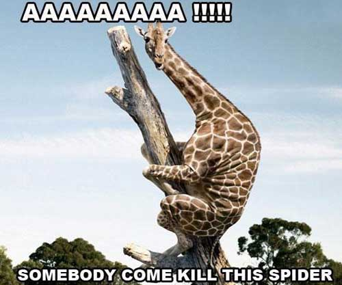 20 most funniest giraffe meme pictures and photos for How to stop spiders coming in your house