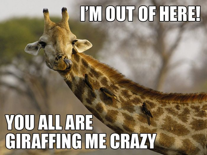 Funny Meme Puns : Most funniest giraffe meme pictures and photos