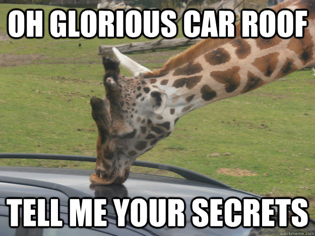 Oh Glorious Car Roof Tell Me Your Secrets Funny Giraffe Meme Image 20 most funniest giraffe meme pictures and photos,Giraffe Meme