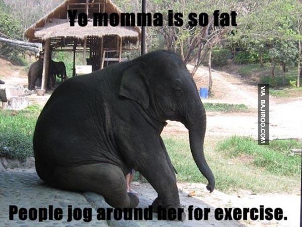 30 Most Funny Elephant...