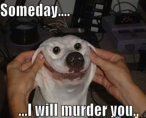 I-Will-Murder-You-Funny-Pet-Meme-Picture