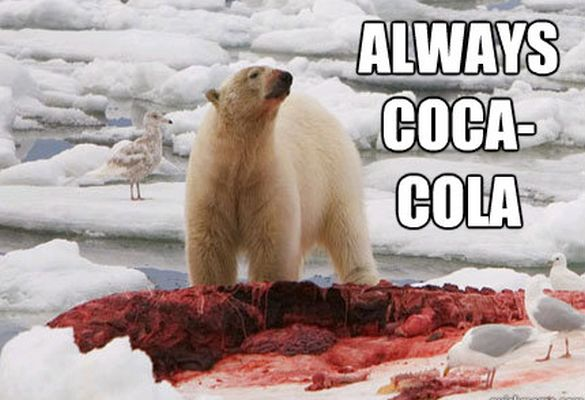 35 Most Funniest Bear Meme Pictures And Photos