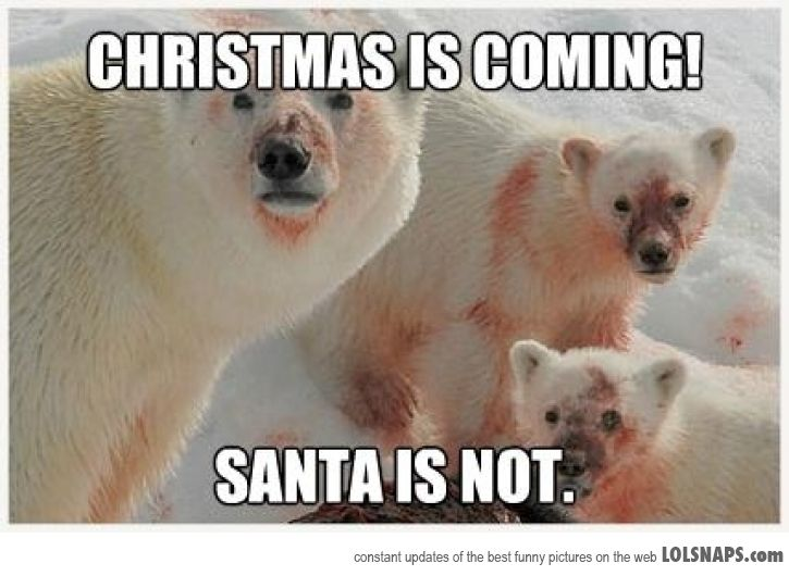 Family Christmas Meme Funny.Christmas Is Coming Santa Is Not Funny Polar Bear Meme Picture