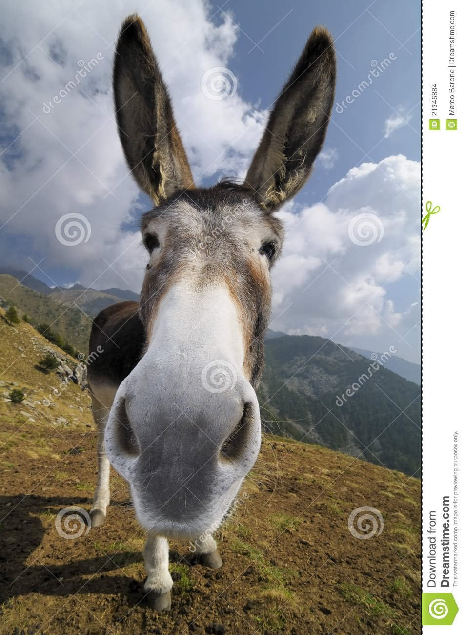 funny donkey faces - photo #25