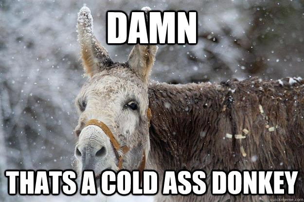 Damn Thats A Cold Ass Donkey Funny Meme Picture damn thats a cold ass donkey funny meme picture