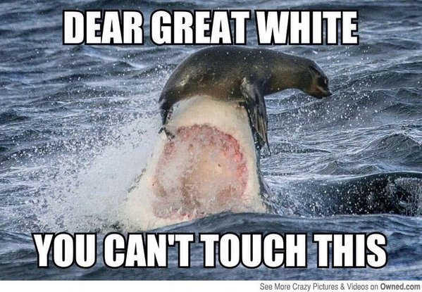Dear Great White You Cant Touch This Funny Shark Meme Image 40 most funniest shark meme pictures and photos