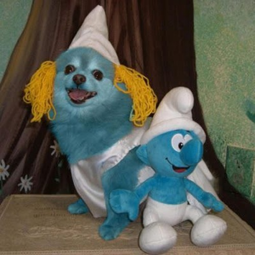 Dog With Smurf Costume Funny Image