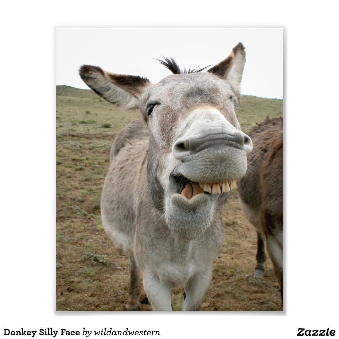 Donkey Silly Face Funny Picture