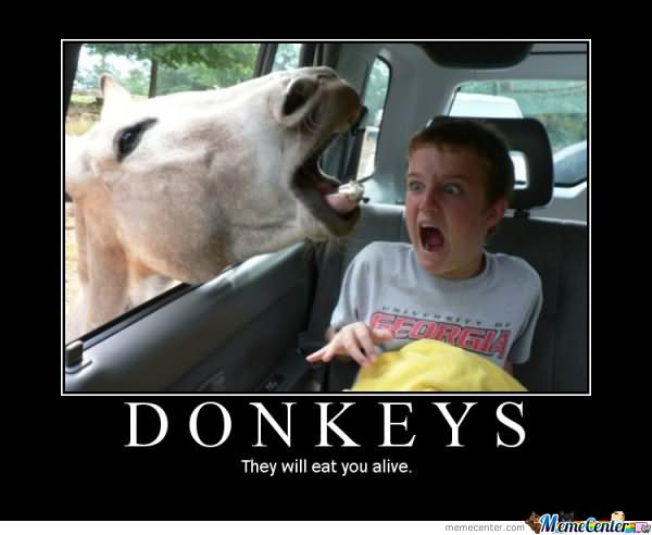 donkeys they will eat you alive funny meme poster