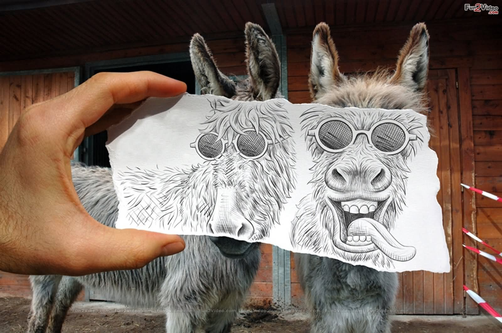 15 Most Funny Donkey Face Pictures That Will Make You Laugh