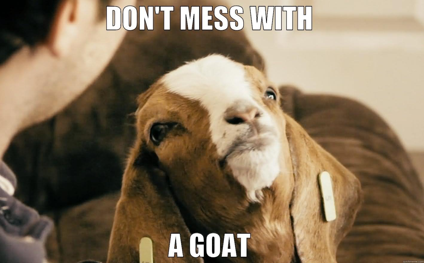 funny goats lessons tes teach