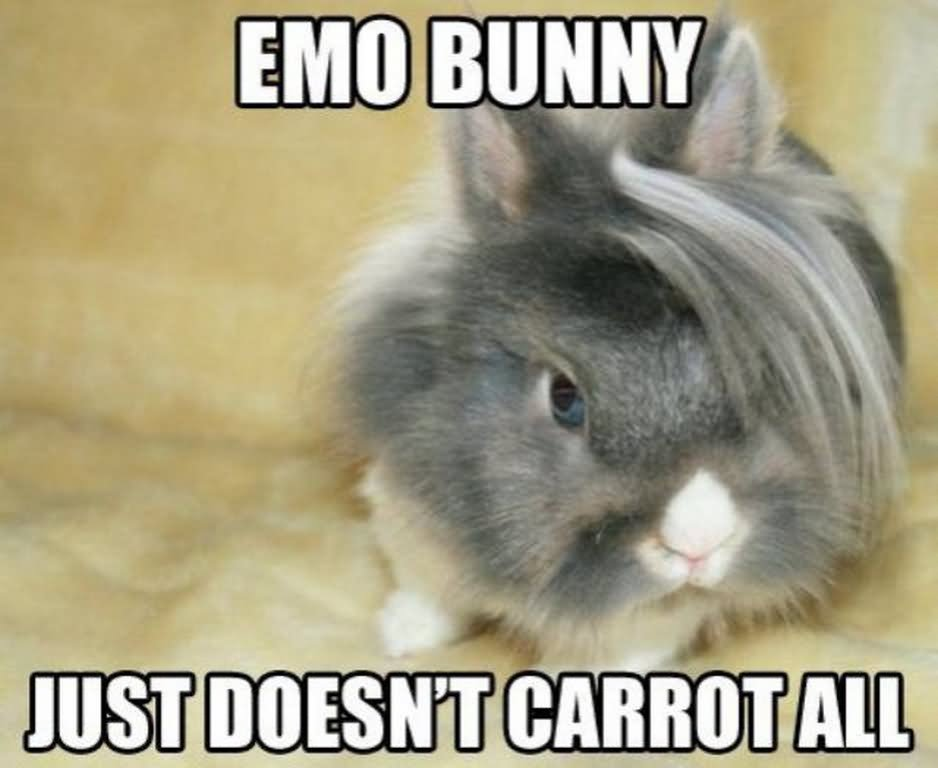 Rabbit Meme