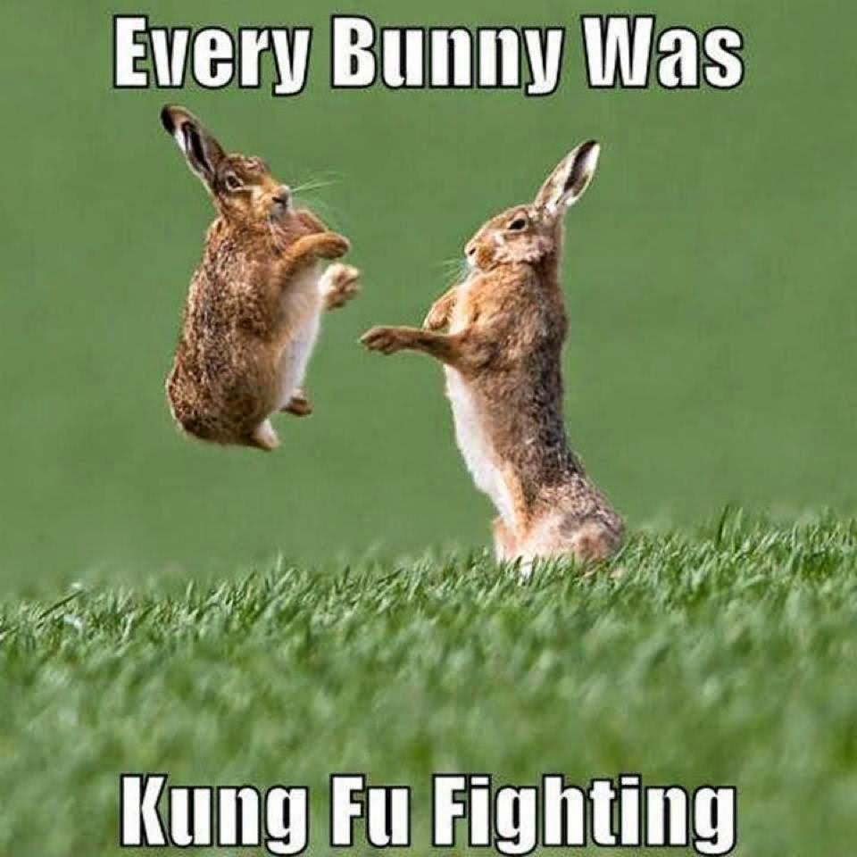 Every Bunny Was Kung Fu Fighting Funny Rabbit Meme Image