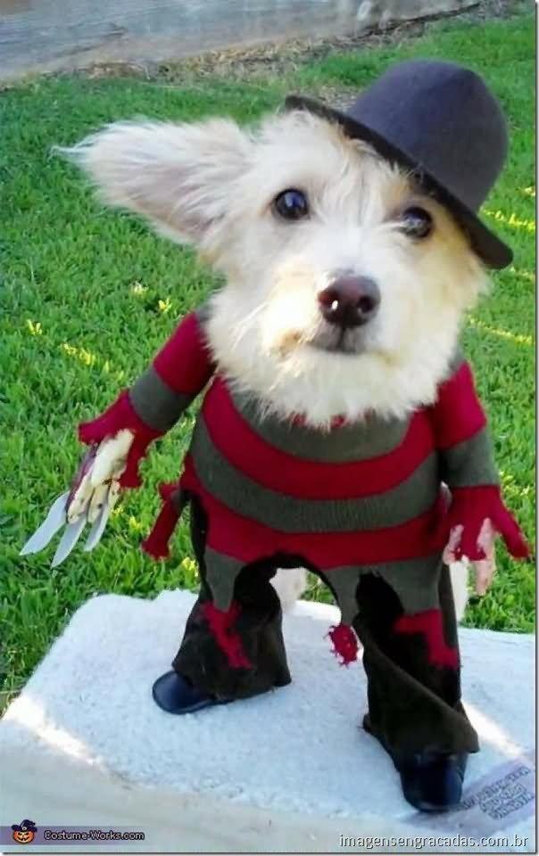 Freddy Krueger Costume For Pet Funny Photo