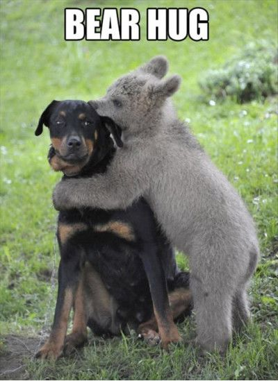Funny Bear Hug Picture For Facebook 35 most funniest bear meme pictures and photos,Meme Bear
