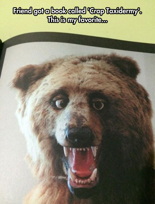 30 Most Funniest Bear Face Photos That Will Make You Laugh