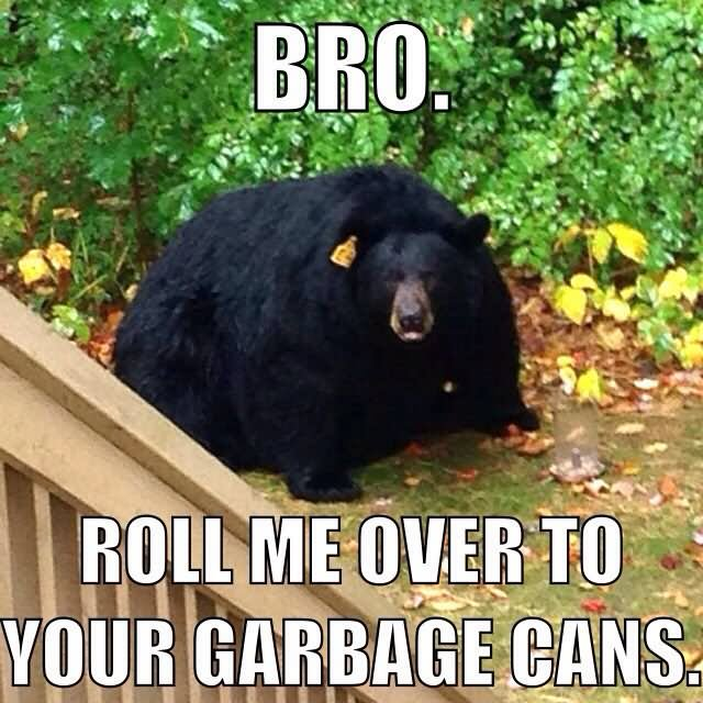 Funny Bear Meme Roll Me Over To Your Garbage Cans Picture 35 most funniest bear meme pictures and photos,Meme Bear