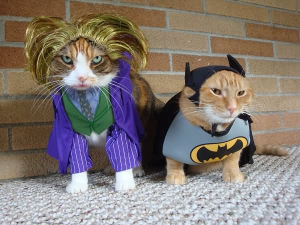 Funny Dark Knight Costumes For Pets Image