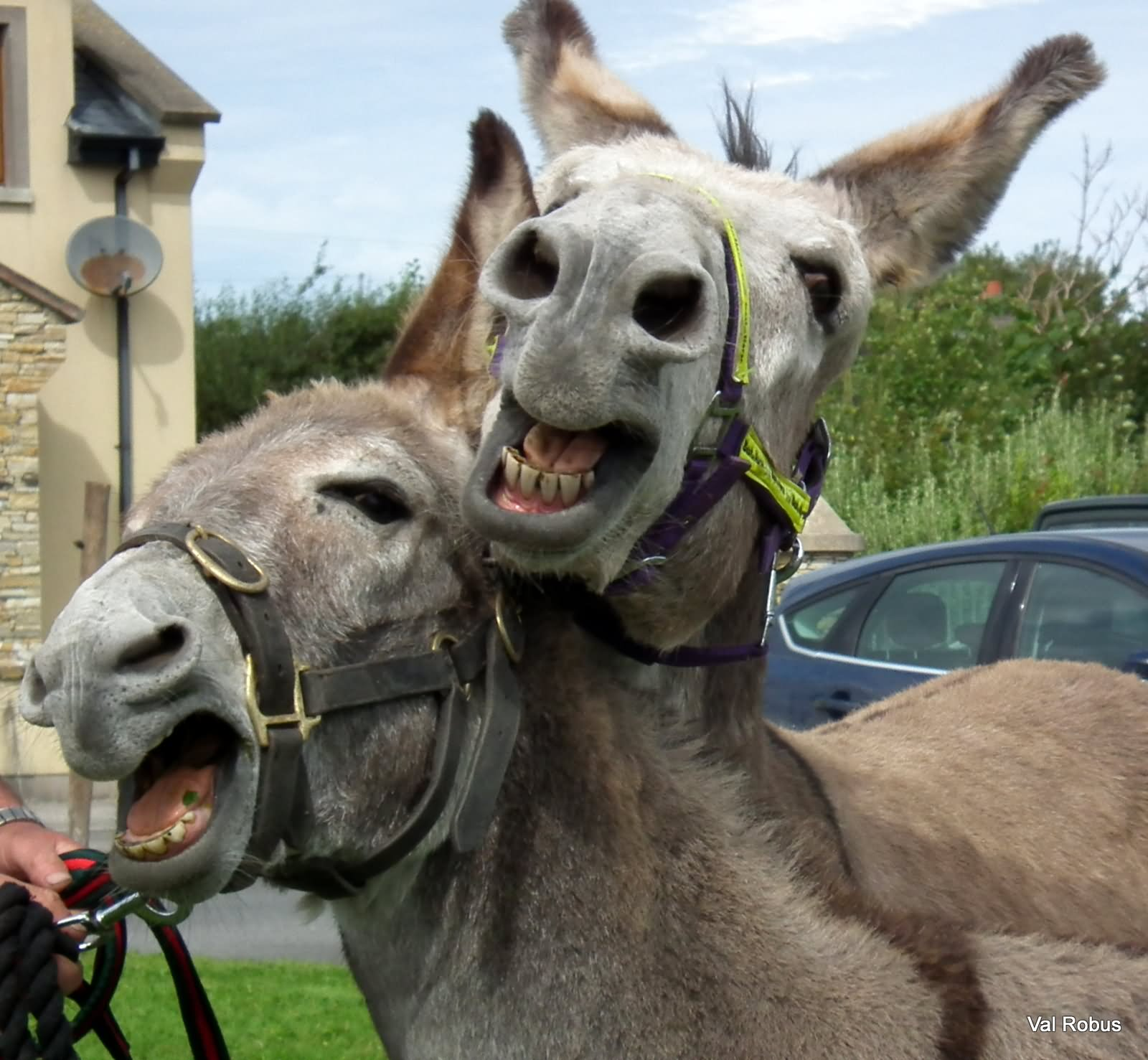 15 Most Funny Donkey Face Pictures That Will Make You Laugh - photo#27