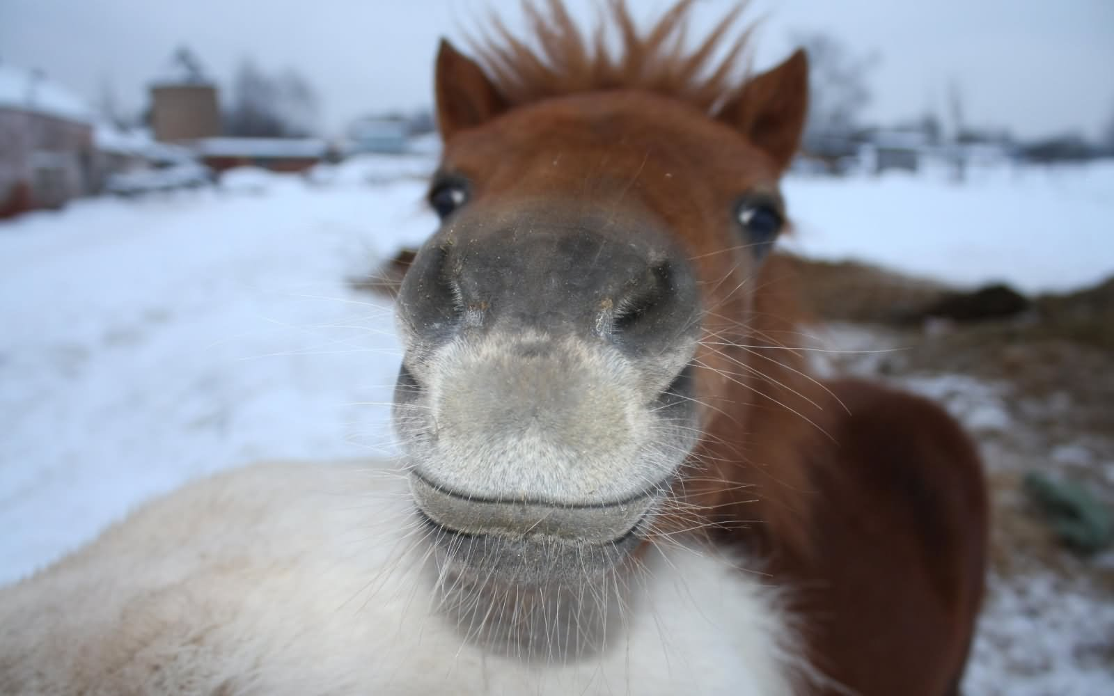 funny donkey faces - photo #24
