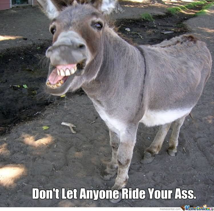 35 most funniest donkey meme pictures and photos